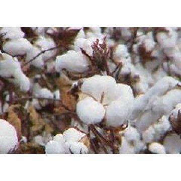 Thuế suất bông cotton